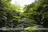 . (Paco Jareño Zafra) Tags: naturaleza verde green primavera valencia hojas arbol selva bosque paco verdes vegetación 6d gama 2014 ramas jareño pacosrulz