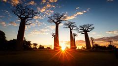 Madagascar (jpmiss) Tags: africa jpmiss sunset afrique 6d sunstar canon madagascar baobabs toliara mg