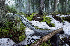 Spring morning (Antti-Jussi Liikala) Tags: morning mist snow creek forest suomi finland flow spring melting long exposure april tampere mets puro sumu kevt huhtikuu kauppi sulaa liikala