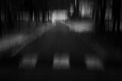 . (Nicolò Panzeri) Tags: road street trees blackandwhite bw abstract motion blur monochrome alberi strada monotone bn impressionism astratto lombardia biancoenero mosso lombardy impressionismo passaggiopedonale cassiglio