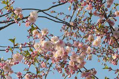 in bloom (Dirk Stenzel) Tags: nikon sunny nikkor blüte herne frühling inbloom 3570mm 3570 f3345 3570mmf3345 d3000 lieblingsobjektiv
