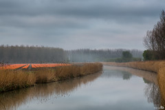 """De Vliegers"" (BraCom (Bram)) Tags: flowers trees mist holland reed netherlands fog creek spring amazing bomen ditch tulips nederland lente riet bloemen tulpen sloot middelharnis zuidholland goereeoverflakkee orangetulips kreek bracom oranjetulpen devliegers"