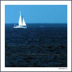 Sailing (Badenfocus) Tags: blue summer sun wasser sommer himmel blau sonne nordsee segelboot segel amrum concordians badenfocus mygearandme mygearandmepremium fujifilmfinepixhs20exr