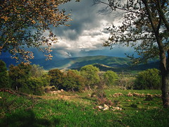 between trees (giorgosgrigoriadis16) Tags: mountains nature canon landscape hellas greece drama shining nikiforos  mountainslandscape dhrama greeklandscape canonnature scenicsnotjustlandscapes dramascenes   canonlandscape canongreece canonpowershotg10 powershotg10 dramalandscapes canoncloudsandsky cloudsanssky ipsilirachi eastmakedonia nikiforosdhrama canongreekscene canonatmosphere