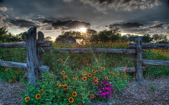 Berry Springs _109 _10 _11_.jpg (stevenroundrock) Tags: sunset colors yellow fence landscape parks wildflowers sunrays hdr woodfence indianblanket berrysprings cedarfence georgetowntexas fieldsofwildflowers wildflowerswoodfence stevenbarb