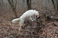 """Chase Is Gonna Climb The Log 3 • <a style=""""font-size:0.8em;"""" href=""""http://www.flickr.com/photos/96196263@N07/14015842549/"""" target=""""_blank"""">View on Flickr</a>"""