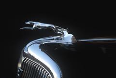 1932 Ford Greyhound Hood Ornament (Klaus Ficker) Tags: old greyhound ford beauty 1932 ornament mature hood oldcar cougar milf klausficker