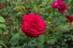 Flower (Kolin Toney) Tags: biltmoreestate biltmore estate mansion gardens asheville nc north carolina visitnc visitasheville fujifilm xt2