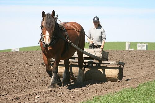 Hannah tromler med hest by michael vester
