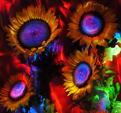 sunflowers on radioactive boo-yah (emellin66) Tags: longexposure flowers lightpainting yellow violet sunflowers psychedelic booyah flashlights soocexceptcrop flowerswithoutlimits loveartflowers creativeartphotography struckbyrainbow