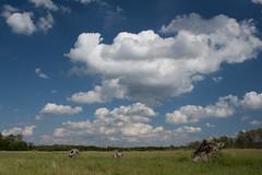 clouds over the prairie (Hoffenbrau Studios) Tags: blue sun white grass clouds canon prairie polarizer skys