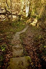 _DSC2793 (petelovespurple) Tags: old monks pathway paved monkspath trod pannierway