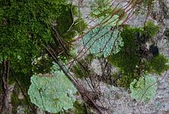 On the bark (Deb Jones1) Tags: trees green nature beauty canon garden botanical outdoors flora australia bark fungus flickrawards debjones1