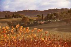 PERUGIA ITALY (Moclere) Tags: travel tramonto passion perugia oro