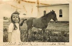 Alberta Tipler & Anaconda Hal (sctatepdx) Tags: tennessee snapshot vernacular colt babyhorse oldsnapshot vintagehorse corkscrewcurls vintagesnapshot vintagecolt bottlecurls anacondahal albertaetipler