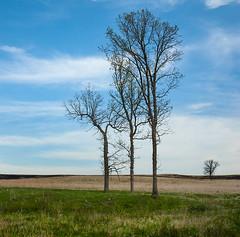 Distinguished (terranoesis) Tags: trees nebraska burn savanna springcreekprairie scpac