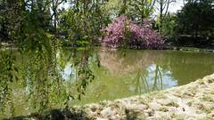 Brooklyn Botanic Garden (john weiss) Tags: camera nyc trees newyork brooklyn garden geotagged unitedstates earth places human botanicgarden geo ebbetsfieldhouses galaxys5 geo:lat=4066856882 geo:lon=7396339685 gpsnames