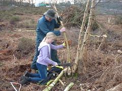 Clearing birch scrub