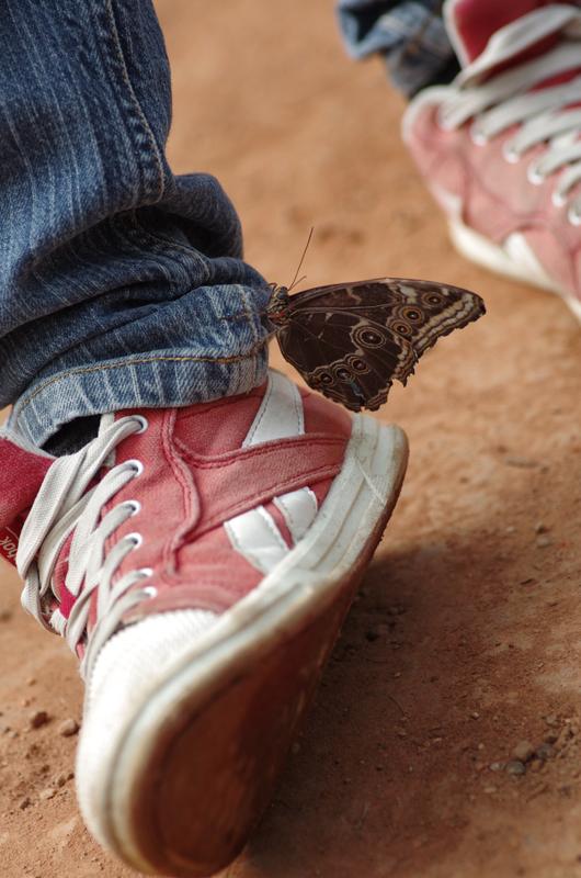 La serre aux papillons la queue en yvelines 5793860279_a775d05f66_o
