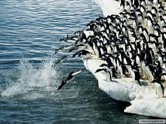 Leadership in the animal world