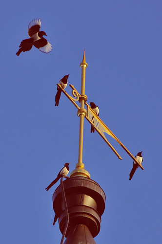 magpies on a castle spire