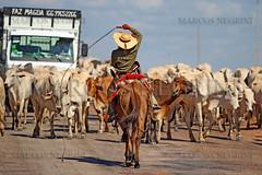 BOIADA (Marcos_Negrini) Tags: ave marcos cavalo tropa pantanal arara boi boiada gado peão negrini