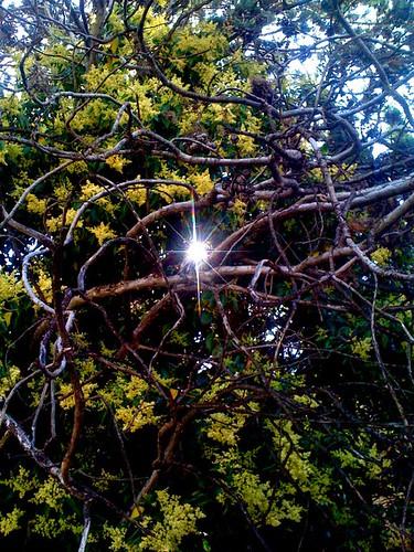 Ramas secas, ramas h�medas by JoseAngelGarciaLanda