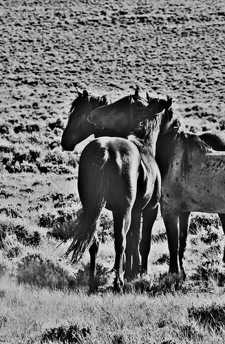 Mustang Bonding