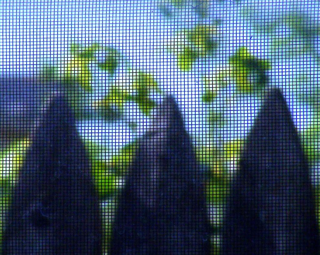 Window Screen, Wooden Fence, Green Leaves
