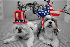 Party like it's the 4th of July! by shutterjo