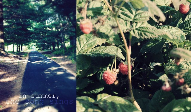 summer time berry picking