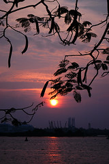 Sunset in Ernakulam (gornabanja) Tags: sunset sky india plant tree port evening nikon d70 harbour kerala ernakulam lplate rememberthatmomentlevel4 rememberthatmomentlevel1 rememberthatmomentlevel2 rememberthatmomentlevel3