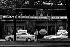 365 Project -- 129 - Rain on Park (Atomox) Tags: street nyc blackandwhite newyork rain umbrella spring manhattan streetphotography parkave 365 eastside photoproject thewaldorfastoria