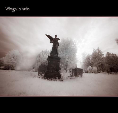 2012 06 19 Wings in Vain