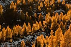 Passo San pellegrino (Photoskatto) Tags: sunset mountain alps montagne landscapes tramonto alpi dolomiti dolomiten segantini paledisanmartino enrosadira baitasegantini cimondellapala theauthorsplaza
