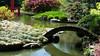 Brooklyn Botanic Garden (john weiss) Tags: camera nyc bridge trees newyork water brooklyn garden geotagged pond unitedstates earth places human botanicgarden geo japanesehillandpondgarden ebbetsfieldhouses galaxys5 gpsnames geo:lat=4066873564 geo:lon=7396274239