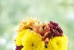 fall #2 (maria_logak) Tags: flowers bouquet macro macrolens nikon dof depthoffield september beautiful bokeh fall