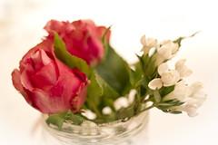 High Key. (sokolskij) Tags: bokeh highkey rose roses eos 1dmarkiv 1dmk4 1d4 40mm