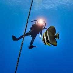 FLA-161001-ND800-8199 (ferlopez) Tags: batfish fish longfinbatfish marinelife plataxteira spadefish underwaterphotography wailea mauihawaii usa