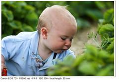 2011_06_04_2963 (John P Norton) Tags: ethan f18 strawberrypicking aperturepriority ef85mmf18usm focallength85mm 13200sec canoneos7d copyright2011johnnorton