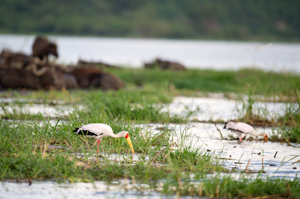 RYALE_Rwanda_Uganda_Safari-205