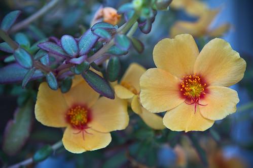 110611 Flower