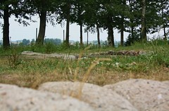 Looking out from a Bayernwald trench, 14 June 2011