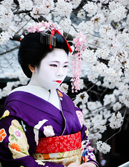 On the streets of Kyoto (Bryony  ) Tags: flowers portrait japan nikon kyoto purple maiko geiko geisha cherryblossom sakura kimono obi gion d90 nikond90