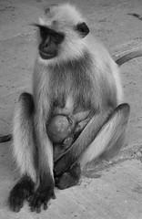 MOTHERHOOD. IN CHITTORGARH, RAJASTAN, INDIA (toyaguerrero) Tags: india motherhood catalan guerrero rajastan toya maternidad maravictoriaguerrerocataln toyaguerrero inchittorgarh maravictoriaguerrerocatalntrujiillana thecoolschoolblog