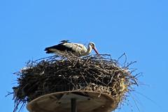 Friendship ... (Simos1968) Tags: canon nest sparrow stork 500d