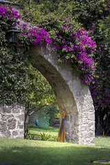 (numbdog) Tags: flowers scenery arch bugambilias
