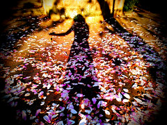 flowers light selfportrait colors spring shadows... (Photo: Creepella Gruesome on Flickr)