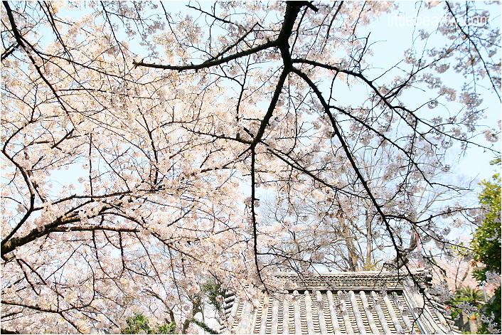 紀三井寺-41