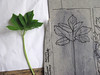 Odine Lang - Making of Herbarium 1